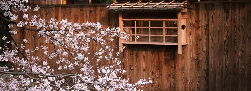 日式建筑樱花