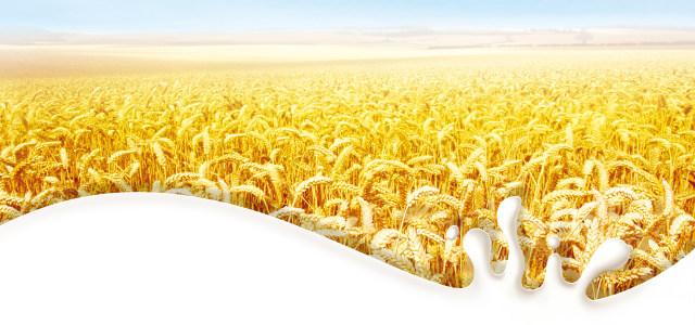 早餐奶麦田背景高清背景图片素材下载