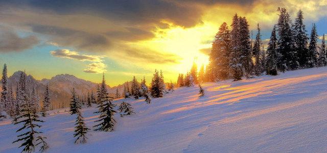 夕阳雪地树林背景
