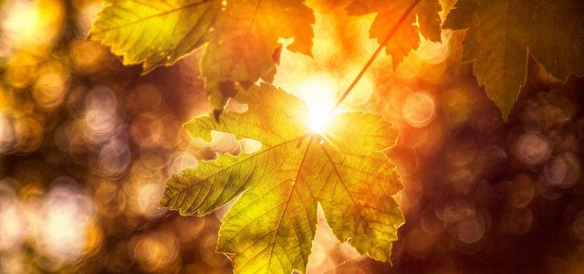 阳光树叶背景