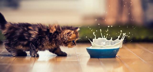 小猫牛奶背景高清背景图片素材下载