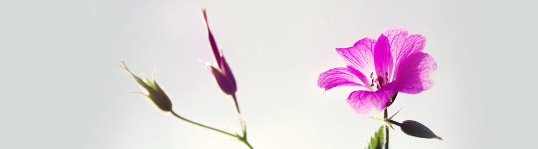 鲜花banner创意设计