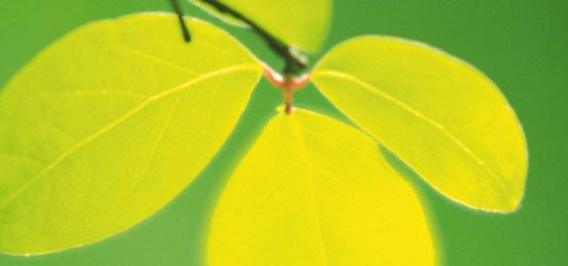 树叶绿色背景