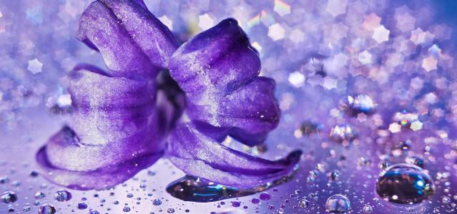 紫色花朵背景高清背景图片素材下载