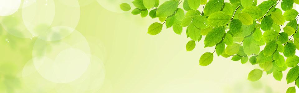 绿色 树叶背景图