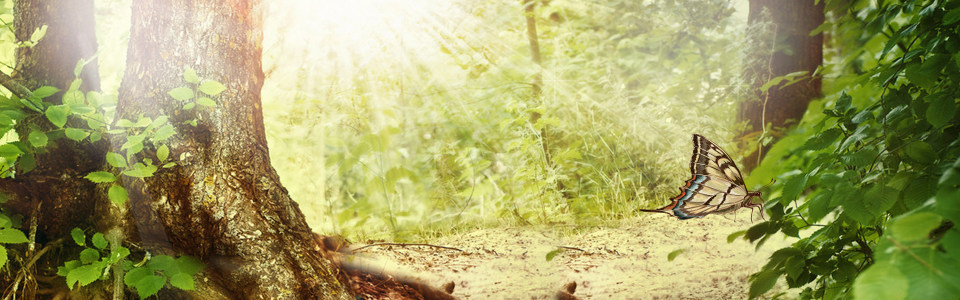 唯美大气森林海报背景高清背景图片素材下载