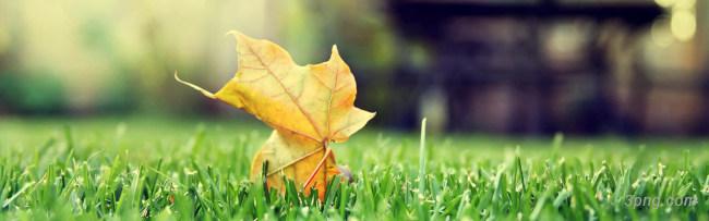 树叶背景背景高清大图-树叶背景底纹/肌理