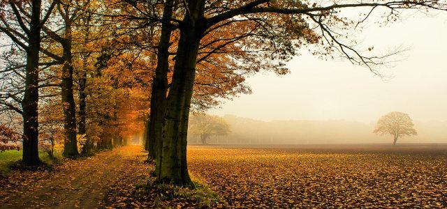 深秋摄影背景高清背景图片素材下载