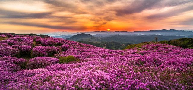 夕阳鲜花背景