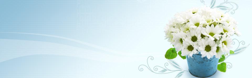 简约唯美白色花朵浅色背景海报背景