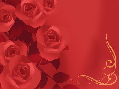 红玫瑰插图背景