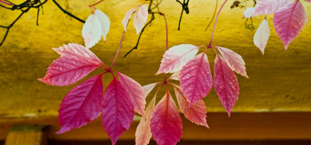 粉色树叶背景高清背景图片素材下载