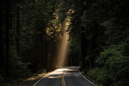 树林道路高清背景图片素材下载