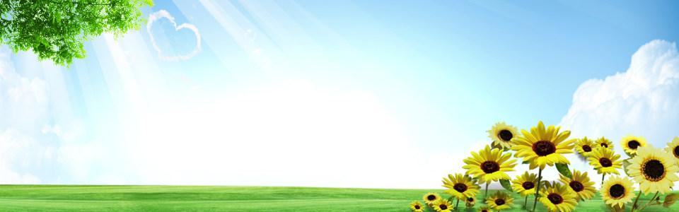 清爽大气蓝天向日葵淘宝海报背景