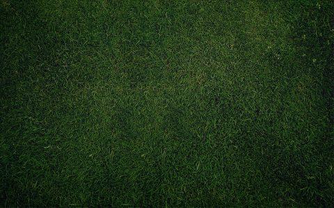 绿地草地背景