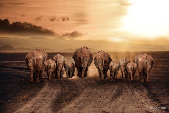 非洲草原大象背景高清大图-非洲背景其他图片