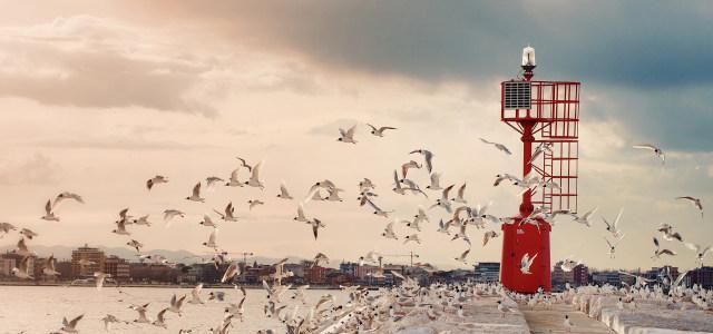 鸽子海港背景高清背景图片素材下载