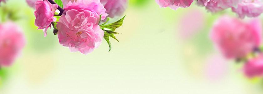 浪漫花朵背景高清背景图片素材下载