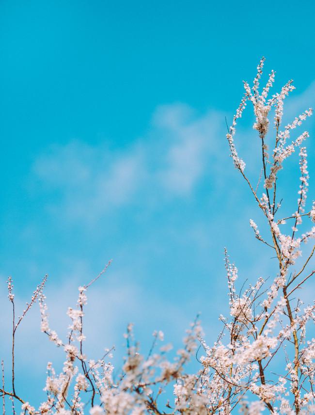 春天桃花背景背景高清大图-桃花背景底纹/肌理