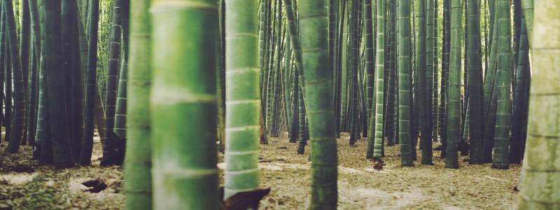 森林背景图高清背景图片素材下载