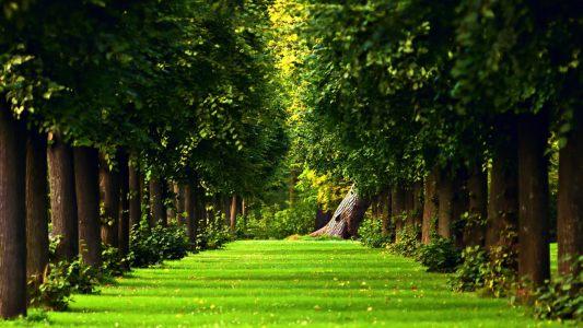 绿色清新草地树林