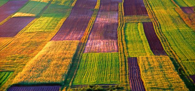 彩色稻田背景