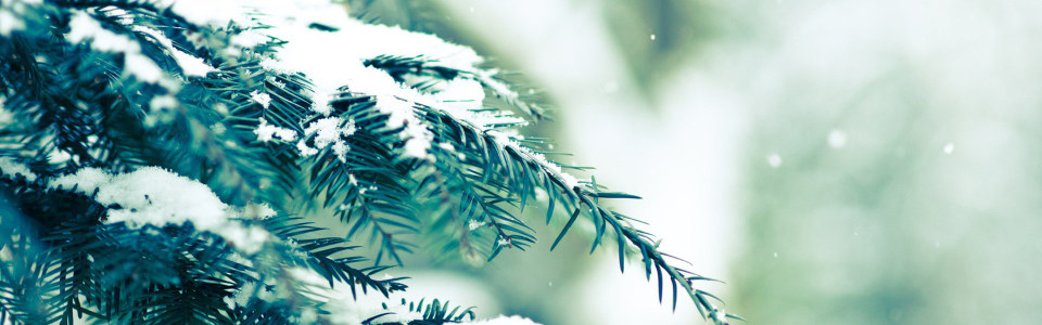 树枝雪花高清背景图片素材下载