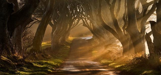 森林背景高清背景图片素材下载