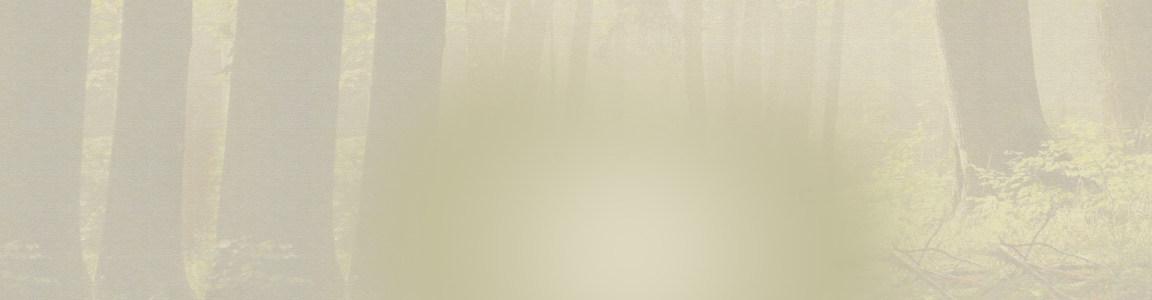 迷雾树林高清背景图片素材下载
