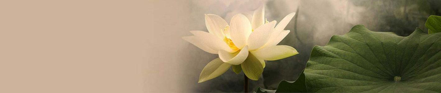 唯美淡雅中国风荷花壁纸高清背景图片素材下载