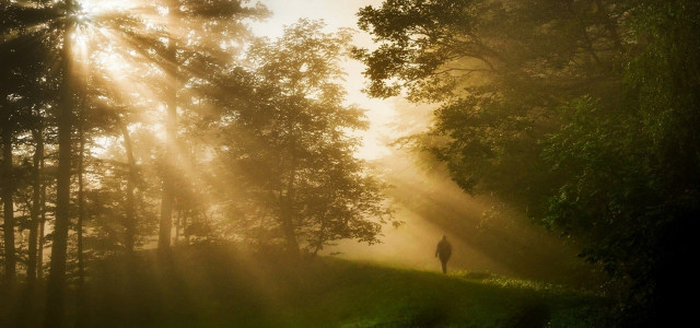 阳光树林背景高清背景图片素材下载