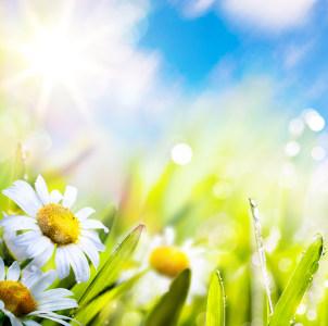 春天的花清新背景