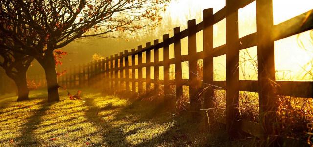 草地大树护栏背景高清背景图片素材下载