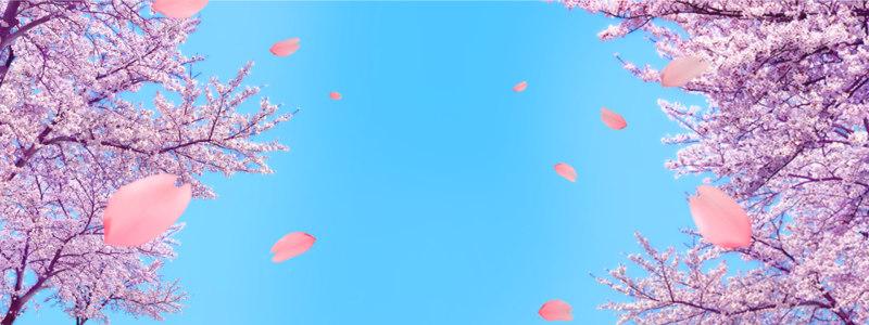 浪漫樱花背景