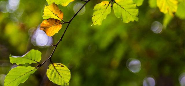 树叶绿色背景高清背景图片素材下载