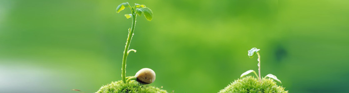 植物发芽广告banner创意设计