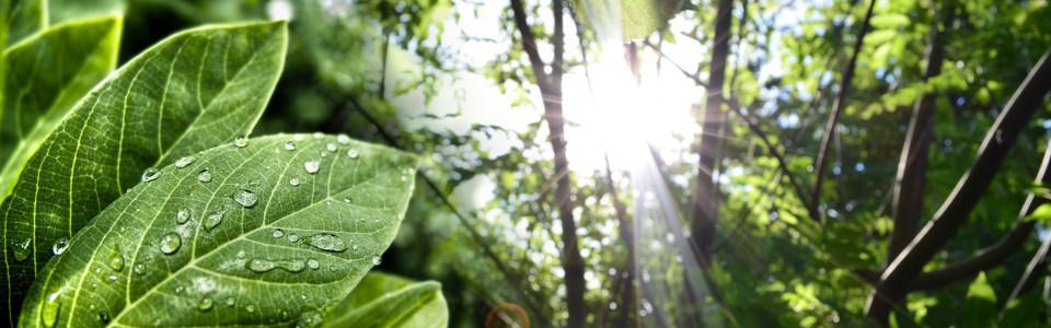 绿叶背景海报高清背景图片素材下载