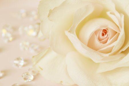 金色玫瑰花