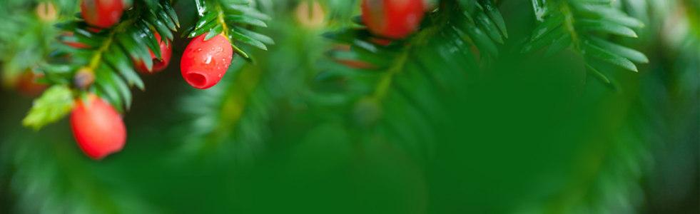 绿色植物背景高清背景图片素材下载