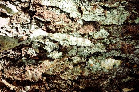 厚实的树皮纹理背景高清背景图片素材下载