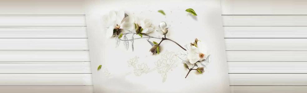 白色木板清新木槿花背景banner