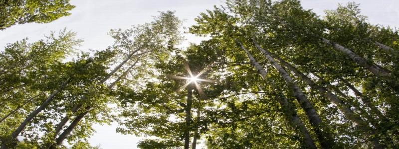 森林背景图