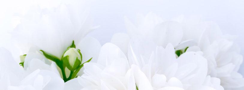 白色花朵唯美清新背景banner