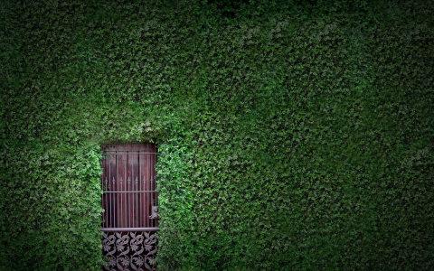 绿色植物藤蔓背景