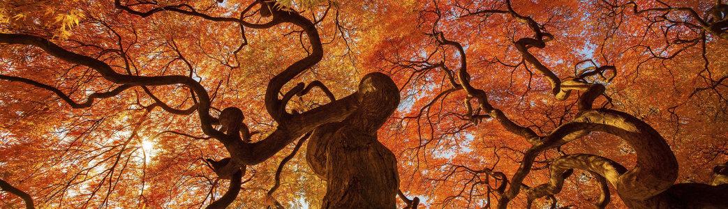 红树摄影banner壁纸