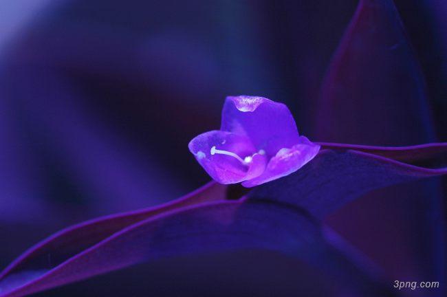 紫色的花背景背景高清大图-紫色背景鲜花