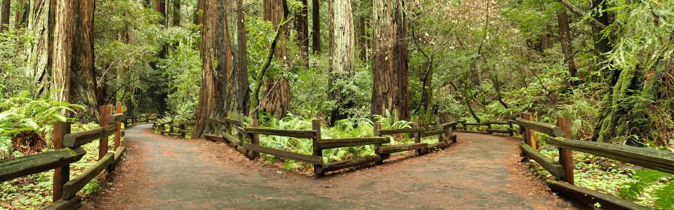 森林唯美绿荫大道古树海报背景高清背景图片素材下载