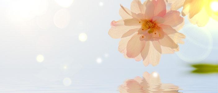梦幻背景花朵
