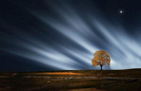 树高清背景