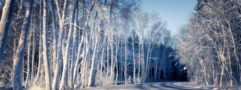 唯美树林风景海报高清背景图片素材下载
